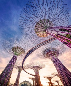 gallery_Gardens-Supertrees-(49)